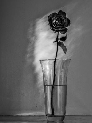 Kathleen Mazzocco, rose