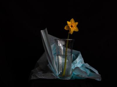 Kathleen Mazzocco, printemps