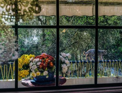MarieFa Alizard - Vu De Ma Fenêtre 1
