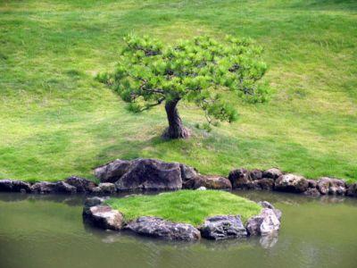 Albert Bouchoucha, arbres
