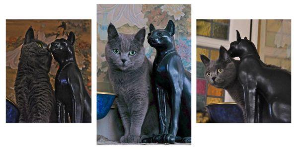 Marie-France Alizard, histoires de chats