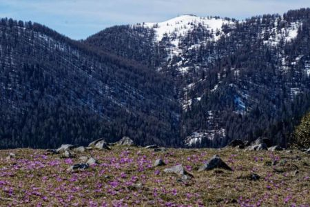 Pierre Diaz, arrivée du printemps en montagne