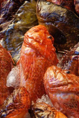 Pierre Diaz, les délices de la mer