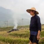 Brulis de Rizière, Vietnam