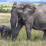 Kenya (the big 5 !)