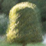 Essai photo peinture - Martine Belmon