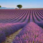 (10) Provence