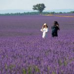 (11) Provence