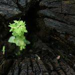 Petite Plante Improbable